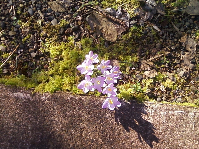 Spring Flowers in February